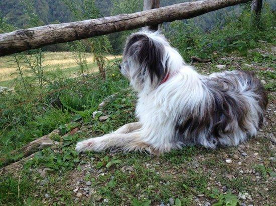 Agriturismo Scuderia Castello: Einer der Hofhunde, welcher die Ausritte begleitet