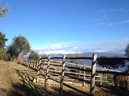 Agriturismo Scuderia Castello: Die Sicht vor den Paddocks über den Gardasee (Vom Gästehaus aus)