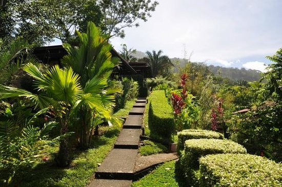 TikiVillas Rainforest Lodge & Spa: Path from the main building to upper villas