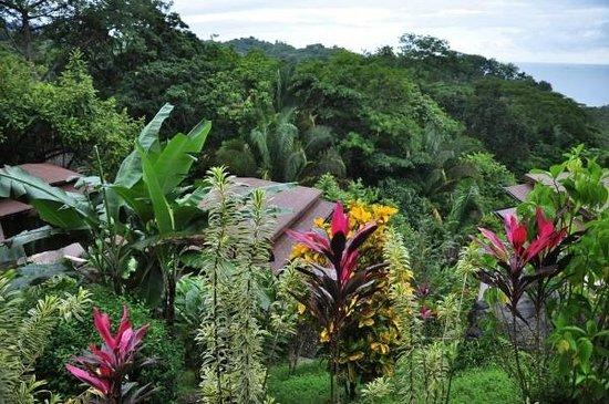 TikiVillas Rainforest Lodge & Spa : Lush garden