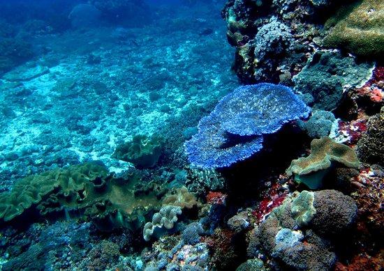 Joe's Gone Diving: Crystal Bay