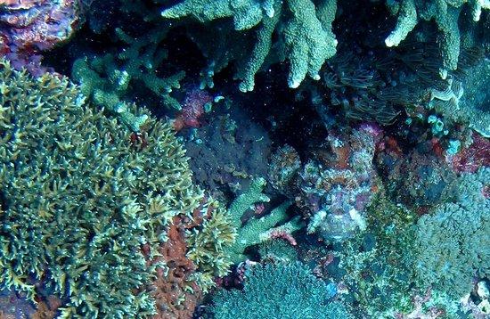 Joe's Gone Diving: Scorpionfish at Crystal Bay