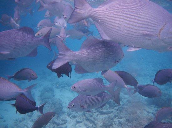 Sun Island Resort and Spa : poissons vue sous-marine