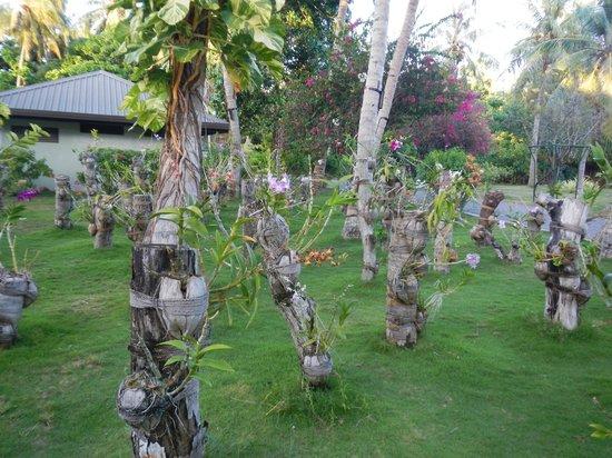 Sun Island Resort: nursery d'orchidées