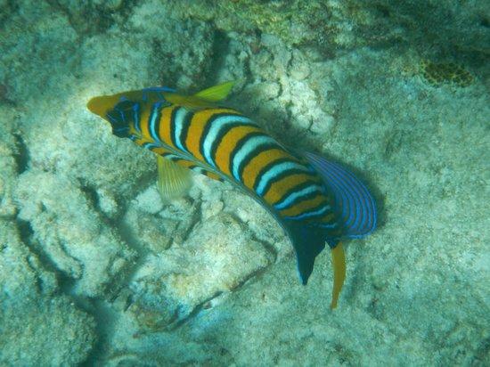 Sun Island Resort and Spa : poisson