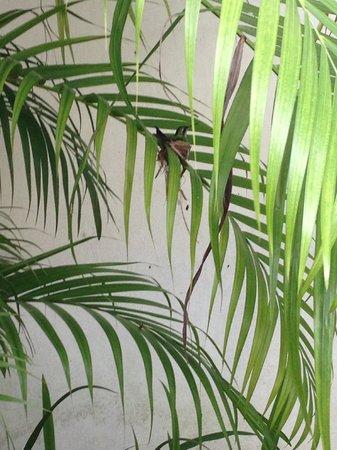 Baldwin's Guest House Cozumel: Emerald Hummingbird nesting