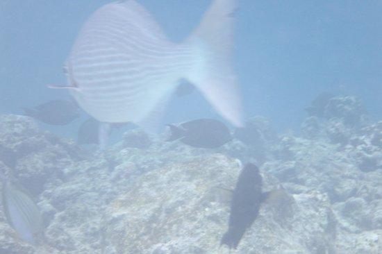 Adaaran Club Rannalhi: Snorkeling