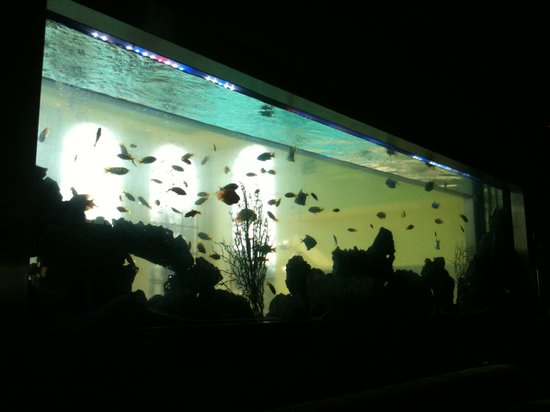Stoke Park Country Club, Spa and Hotel: Fish Tank