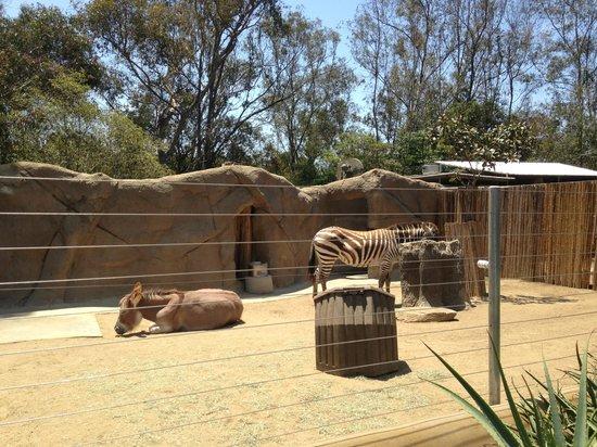 San Diego Zoo: Zimbra