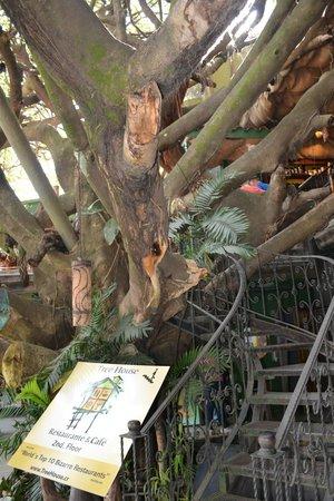 Tree House Restaurante & Cafe: Tree