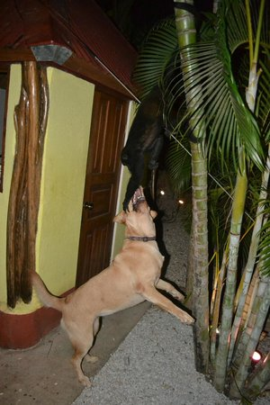 Indra Inn: Monkey!