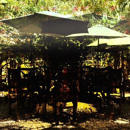 Earth Mama's Garden Cafe & Lifestyle: The Garden