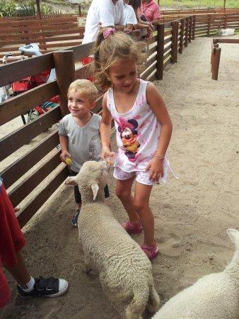 Mundo Marino : Nuestros hijos dandole alimentando los corderitos