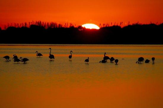 Orizzonti di Gallura: alba in Laguna (foto Manuel Pirina)