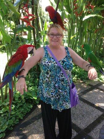 Bali bird park 8