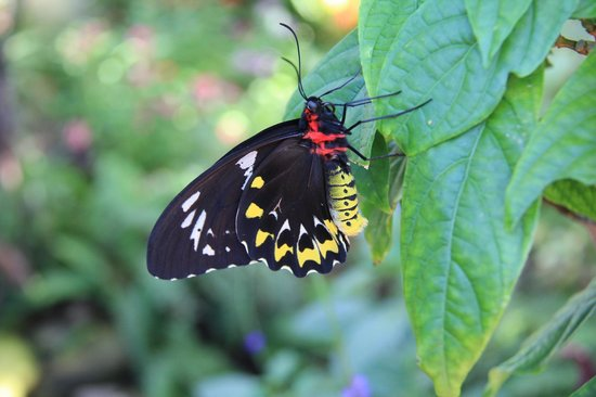 Southernmost Beach Resort : The butterfly emporium A must see