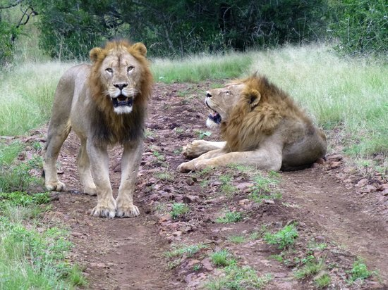 Rhino River Lodge: Howzit brother...