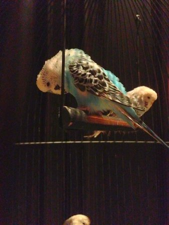 Rosewood London : Parrots in the lobby