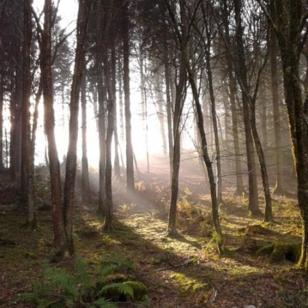 Center Parcs Longleat Forest: Early morning through the trees