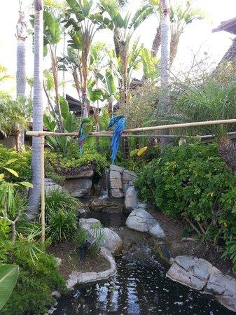 Humphreys Half Moon Inn & Suites: Birds & koi pond