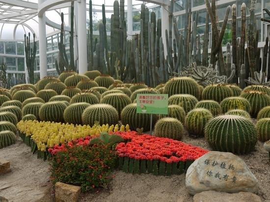 Xiamen Botanical Garden: Закрытая оранжерея