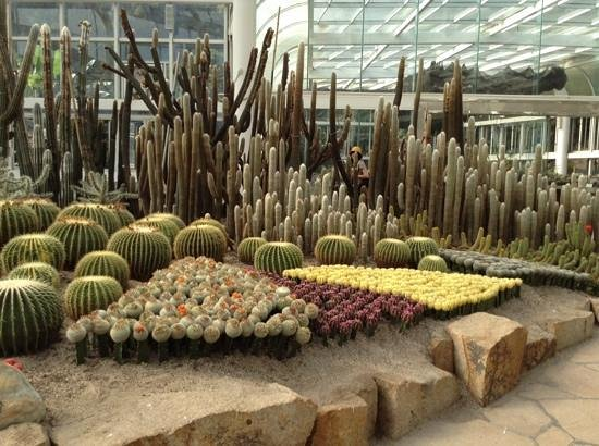 Xiamen Botanical Garden: кактусы))