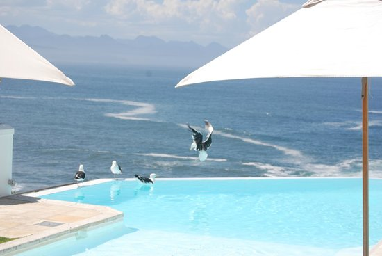 View from SeaFood at the Plettenberg of pool and bay