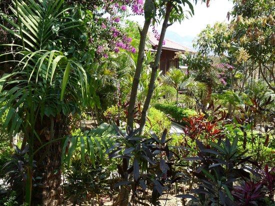 Princess Garden Hotel : jardin