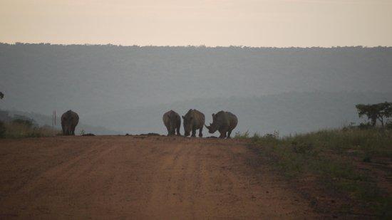 Nedile Lodge: Rhinos approaching!