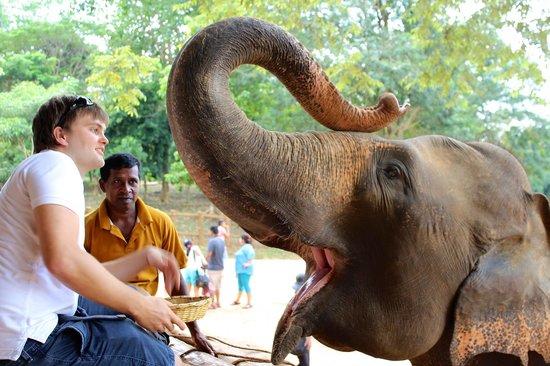 Пиннавала, Шри-Ланка: Pinnawala