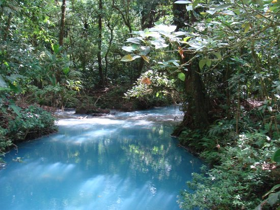 Rio Celeste Hideaway Hotel: Tenorio National Park trail view of river