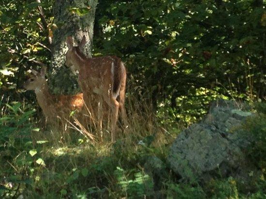 Skyland: Deer