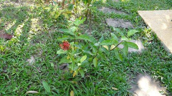 La Maison d'Angkor : les fleurs
