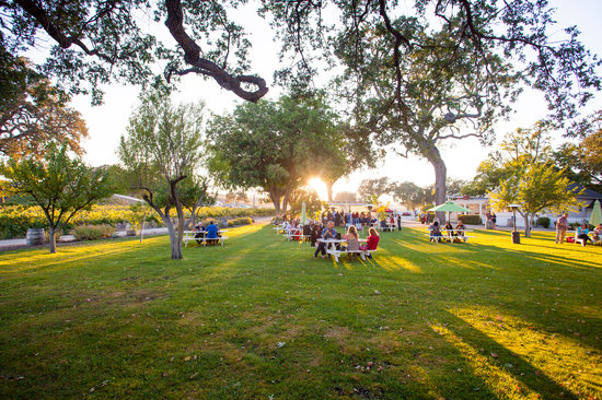 Peachy Canyon Winery: The Peachy lawn... perfect for picnics! Chairs and blankets always welcome.