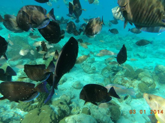 San Andres Noblehouse Hotel: acuario