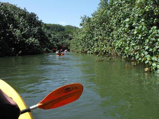 Wailua Kayak Adventures : Kayak up the river