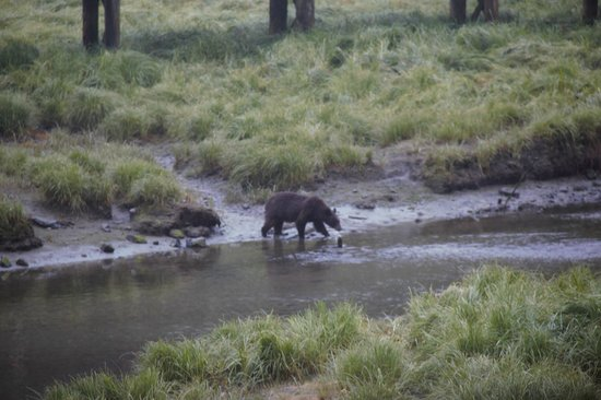 Ketchikan Taxi Cab Tours: Bear Sighting
