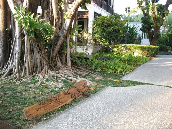 """137 Pillars House Chiang Mai: hier sieht man die Liebe zum Detail, Elephantenkopf auf dem Weg...""""Elephant trail"""""""