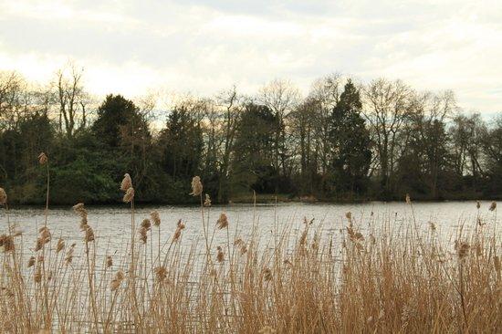 Lake at Sudbury Hall