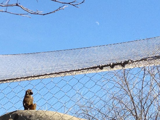 Indianapolis Zoo: Moon watcher