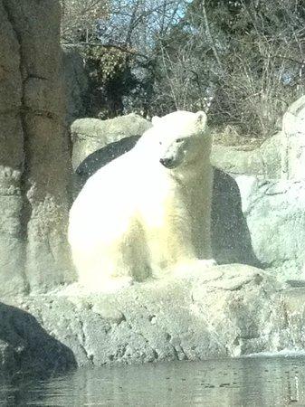 Indianapolis Zoo : Polar bear