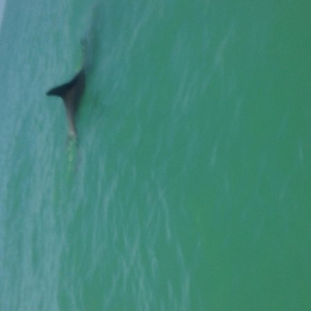 Siesta Key Bike and Kayak : Dolphins swam under my board