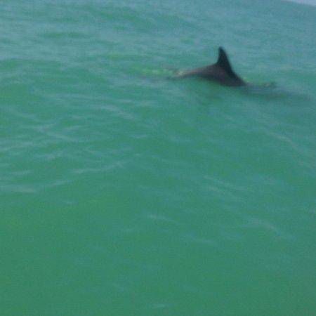 Siesta Key Bike and Kayak : Dolphins swam under my board