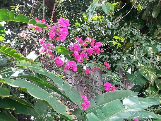 Villa Escondida Cozumel Bed and Breakfast: Tropical plants.