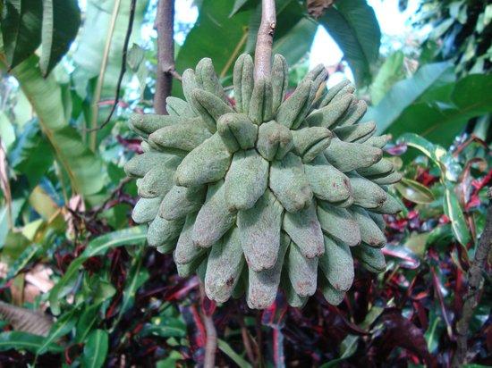 Cataratas Bijagua Lodge: Bijzondere planten