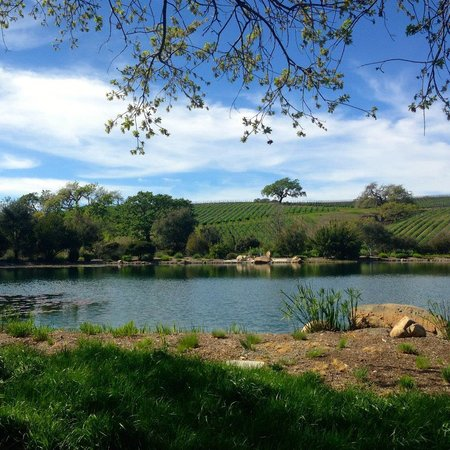 Sustainable Vine Wine Tours : Grassini Family Vineyards