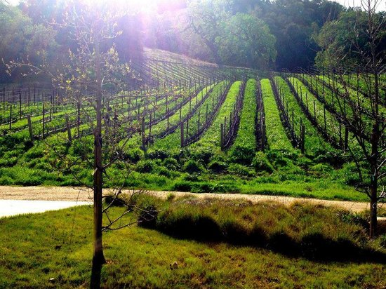 Sustainable Vine Wine Tours : Refugio Ranch
