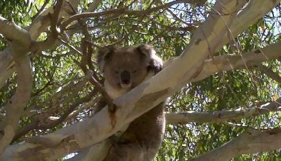 Exceptional Kangaroo Island : One of our many wildlife sightings