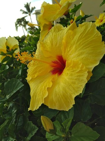 Mauna Lani Bay Hotel & Bungalows: Tropical flowers around the grounds