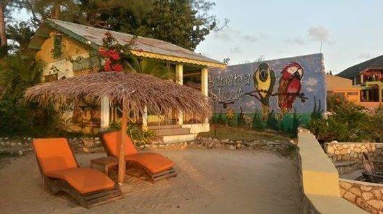 Banana Shout Resort : Dolphin view